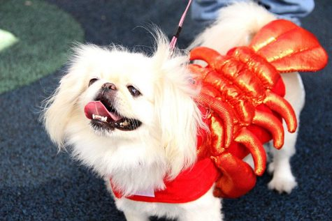 Upon first arriving, I was greeted by this cutie who was dressed as a glittery lobster and seemed very excited that I wanted to pet her.