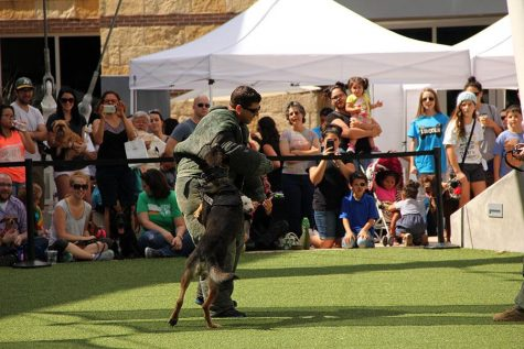 The german shepherds show off their incredible ability to take down criminals on command.